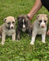 three puppies on grass